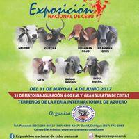 Exposicin Nacional de Ganado Ceb en Panam