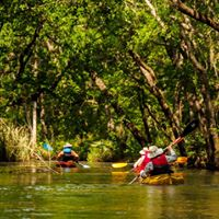 Ogeechee River Paddle &amp Ossabaw Tour