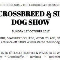 Lurcher Crossbreed &amp Sighthound Dog Show
