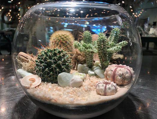 Cactus Terrarium Workshop At Hinterland Trading Virginia Beach