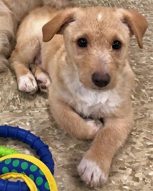 Adoption Weekend at PetSmart