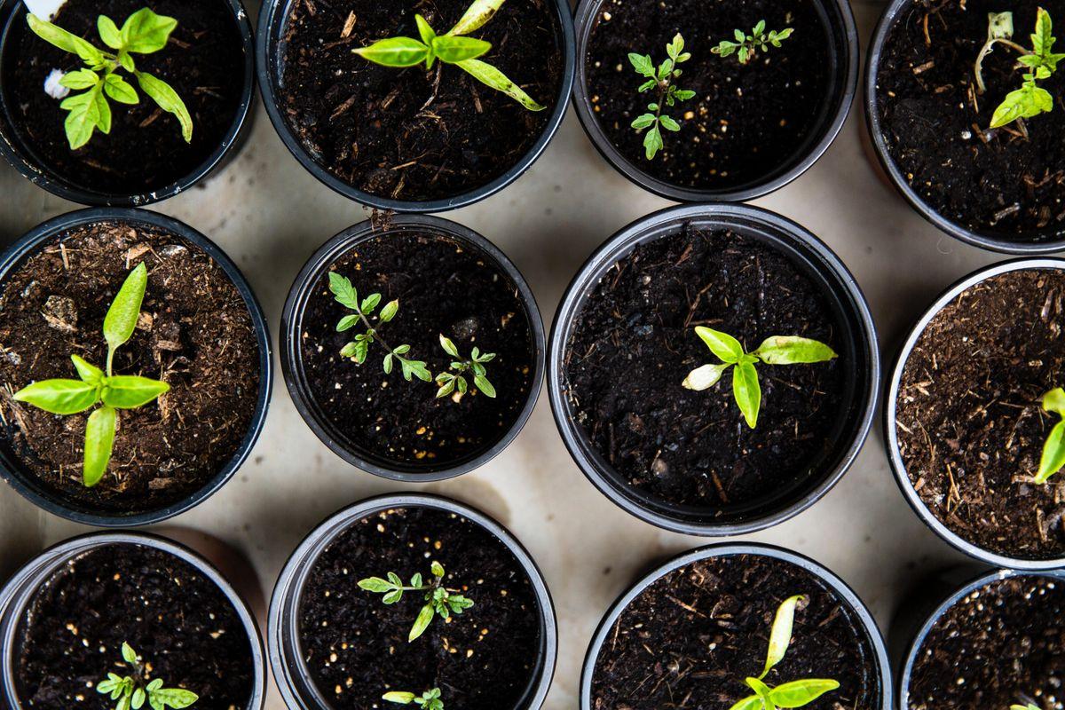 Personal Development  Leadership Masterclass  Laws of Growth  Pine Hub