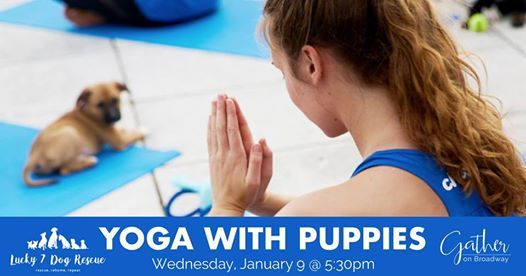 Yoga With Puppies At Gather On Broadway139 N Broadway Green Bay