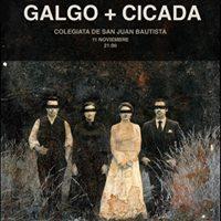 Galgo  Cicada Concierto presentacin Framily