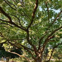 Homeschool in the Garden Basic Tree ID