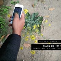 Garden to Table Foraging in Lodhi Gardens