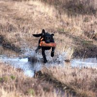 Beginners Gun Dog Workshop with Collette May