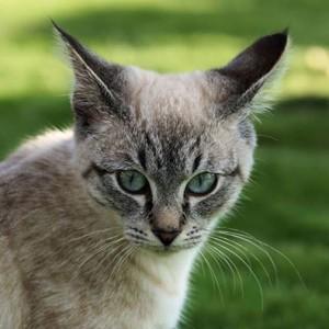 Applied Zoopharmacognosy Feline Gateway Workshop