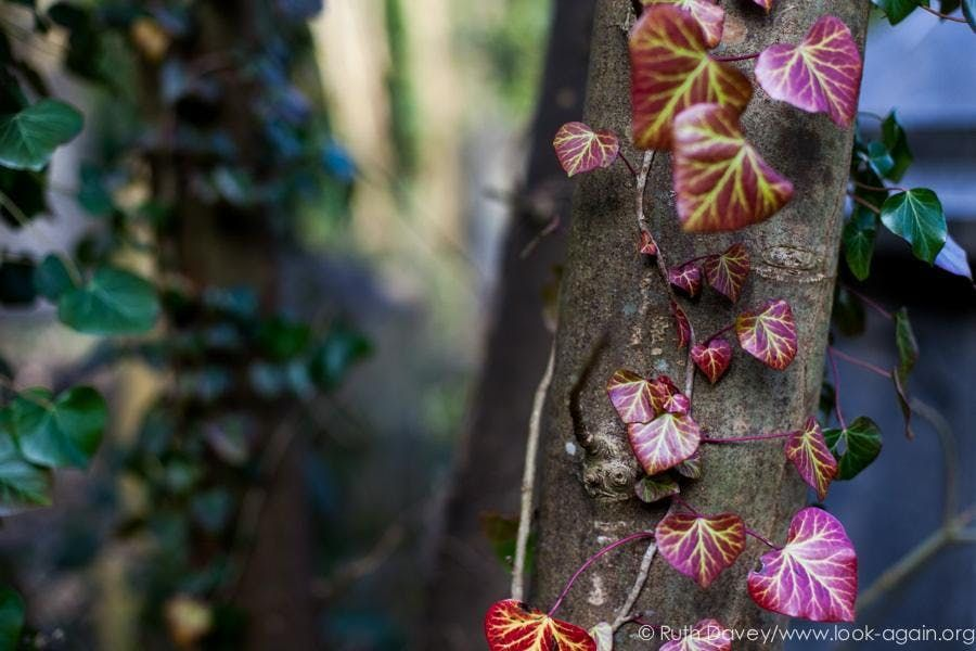 Mindful Photography Workshop. See Arnos Vale Cemetery with Fresh Eyes