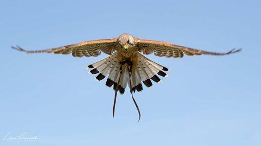Birds of Prey Photography Course