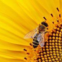 Honeybees as Pollinators - Members Only Event