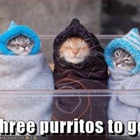 Cat House on the Kings Chipotle Fundraiser