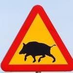 Jägareförbundet Stockholms centrala jaktvårdskrets