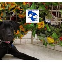 DIVA BY DIVA Support GEB Puppies