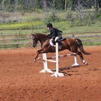 CCEC Open Horse Show Series