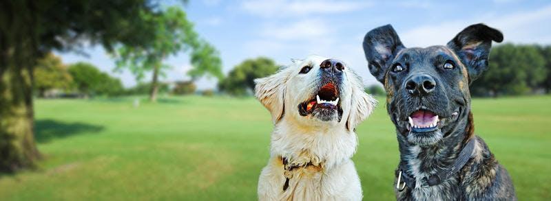 GOOD DOG (LEVEL 1) Thursday DSPCA