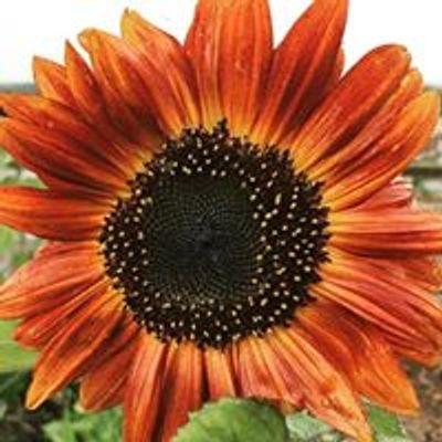 Duluth Community Garden Program