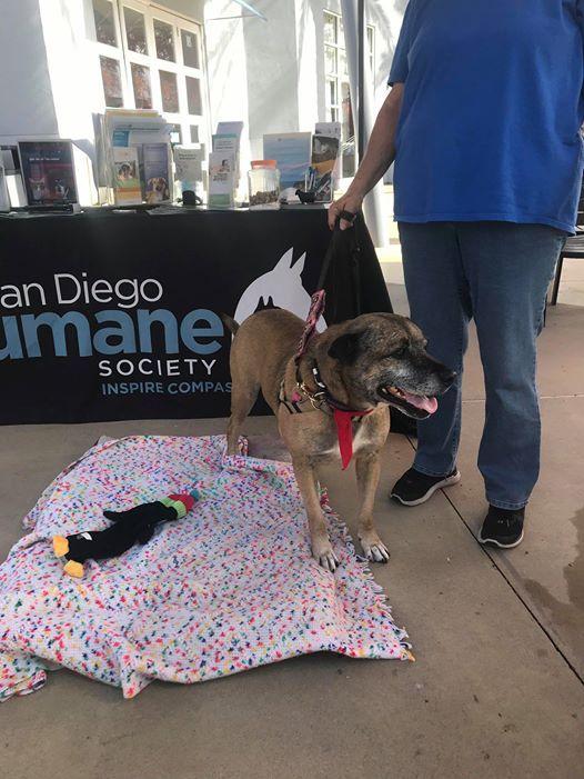 San Diego Humane Society Adoption Event at The Island