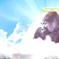 Harambes 1 year commemoration at Cincinnati Zoo