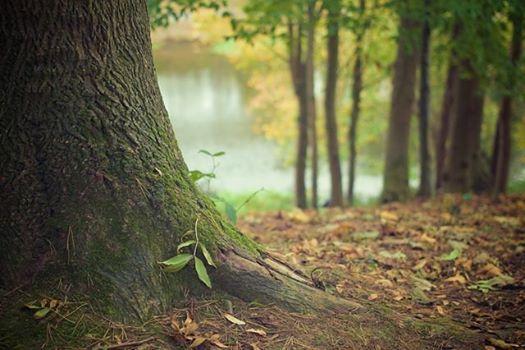 Bao de bosque Shinrin-Yoku