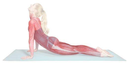 Integrative Yoga Anatomy