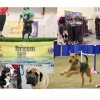 Dog Agility Training Louisville Ky