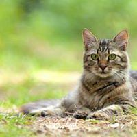 Il gatto olistico - Corso formativo