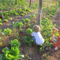 Curso Agrofloresta Stio Solarte