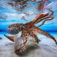 Immersione nelarea marina protetta di Portofino