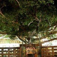 Indian Pilgrimage - From the Bodhi Tree to Triratna
