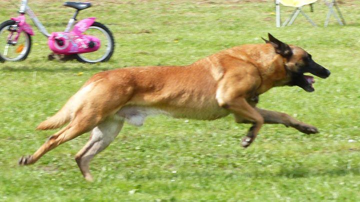 club canin warcq