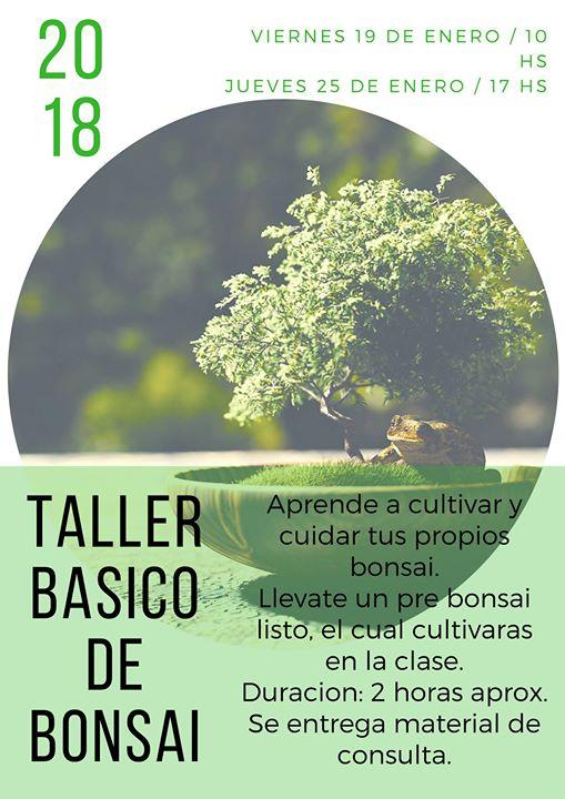 Taller Basico de Bonsai