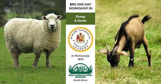 1-Day Workshop Sheep & Goats