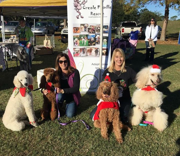 Creole Poodle Rescue at Pet Fest 2017 | Metairie