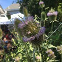 Rhode Island Herb Festival