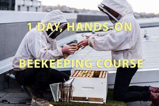 1 day intensive beekeeping course - April 2019
