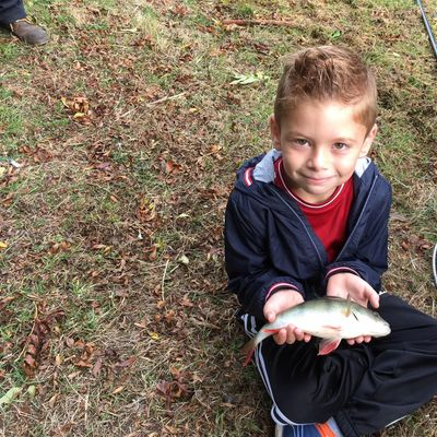 Free Lets Fish - Marsworth  - Learn to Fish Sessions -Tring Anglers