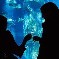 Silent Disco at the SEA LIFE London Aquarium