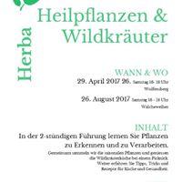 Heilpflanzenfhrung im Wolfensberg