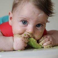 Homemade Baby Food and Baby Led Feeding