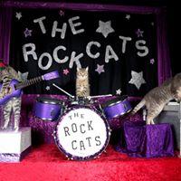 The Amazing Acro-cats Woo Austin