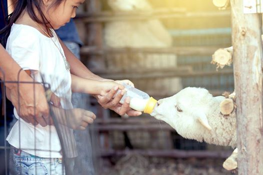 Easter Junior Animal Keeper Day