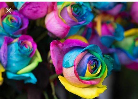 Pot-O-Gold Rainbow Rose