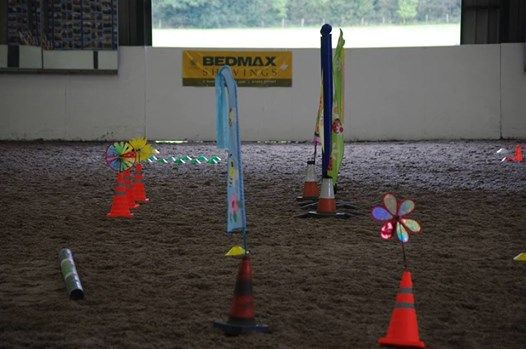 Online Horse Agility Competition Workshop