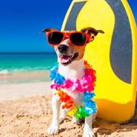 USBG Miami Dog Beach Day