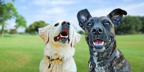 GOOD DOG (LEVEL 1) Sunday Shanganagh Park