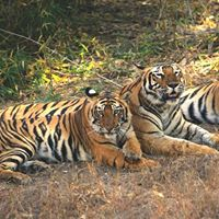 2N3D Pench Tiger Reserve (Madhya Pradesh) for Rs.10209person