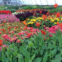 Powell Gardens Plant Sale
