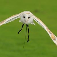Falconry Weekend at Cannon Hall Farm