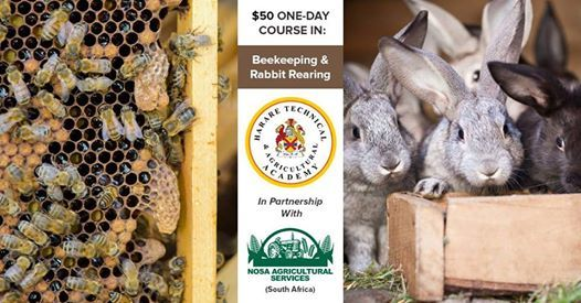 1-Day Course Bees & Rabbits